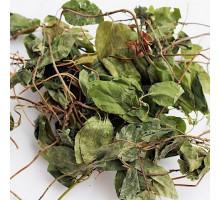 Боровая матка (трава) - 50 гр.