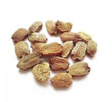 Герпетоспермум (семена) - 50 гр.