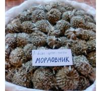 Мордовник (шишка) - 50 гр.