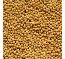 Горчица белая (семена) - 50 гр.
