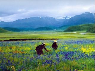 Тибетские травы и для красоты тоже?