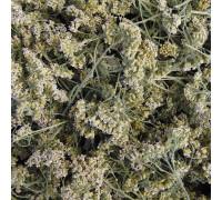 Тысячелистник (трава) - 50 гр.